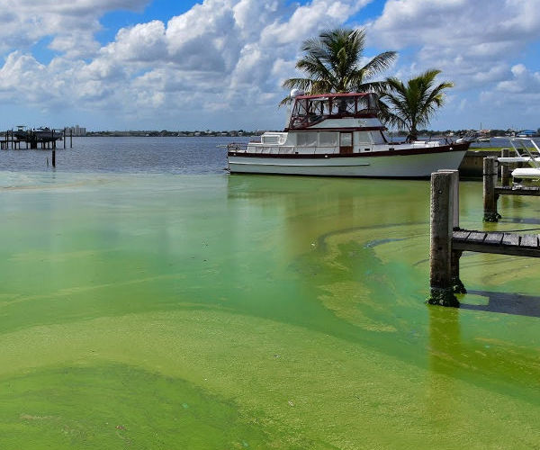 "WXEL TV special ""Toxic Algae: Complex Sources and Solutions"""